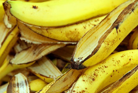 banana-peels-in-the-composter-for-humus-page
