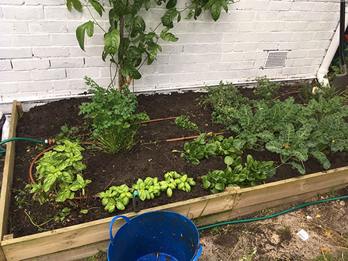 use-compost-in-garden02