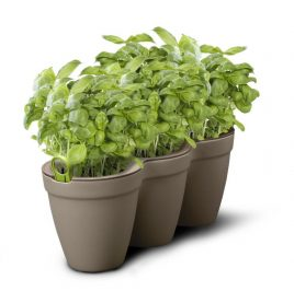 3 Herbs Planter Kit (Grey)