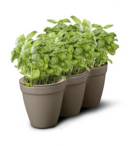 3 Herbs Planter Kit (Grey)