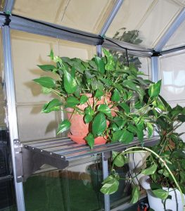Greenhouse Drip Kit