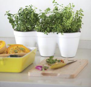 Ivy Herb Planter (White)