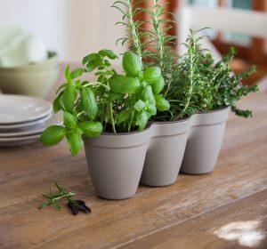 Ivy Herb Planter (Grey)