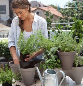 Ivy Planter (Grey)