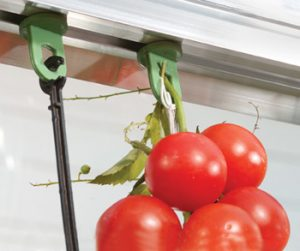 Plant Hangers -Pack of 10