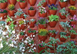 Plantscape Jug